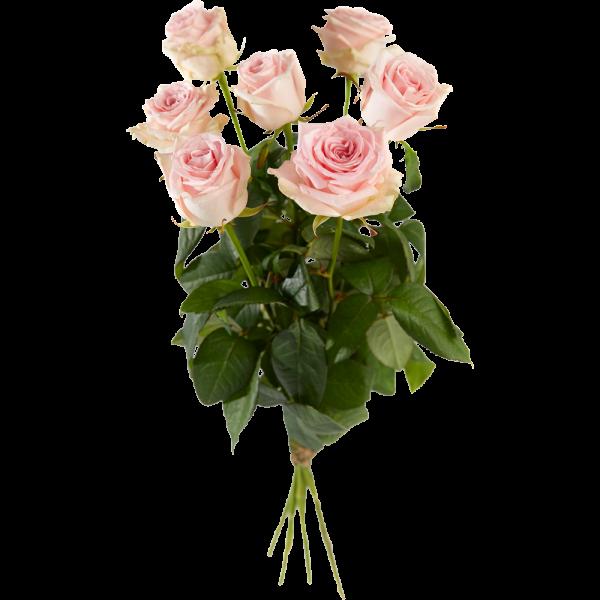 roze-rozen